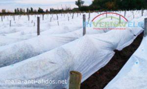 Cultivo con malla anti afidos